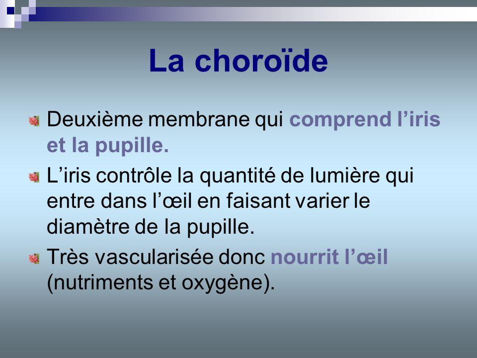 La choroïde Deuxième membrane qui comprend l'iris et la pupille.