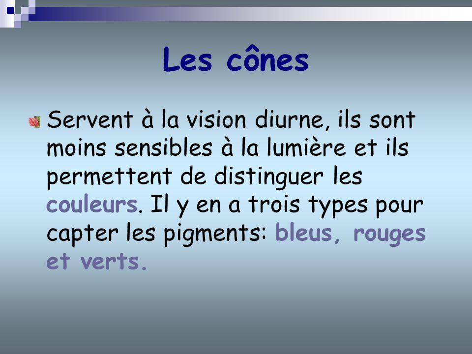 Les cônes