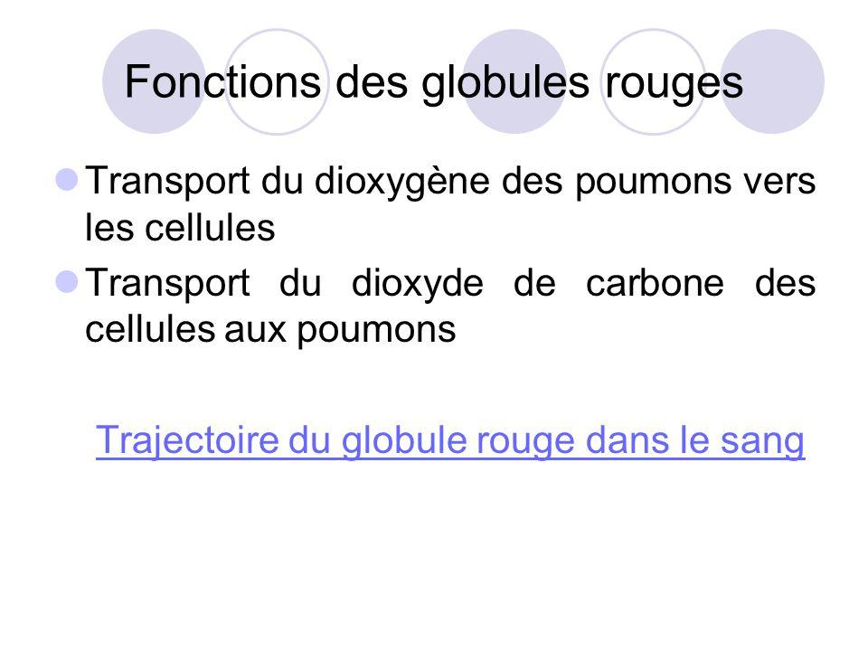 Fonctions des globules rouges