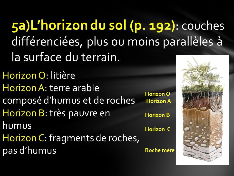 5a)L'horizon du sol (p. 192): couches différenciées, plus ou moins parallèles à la surface du terrain.