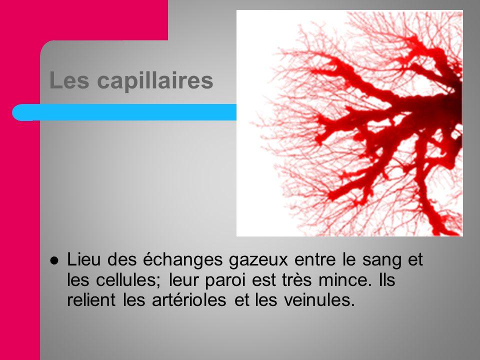 Les capillaires Lieu des échanges gazeux entre le sang et les cellules; leur paroi est très mince.