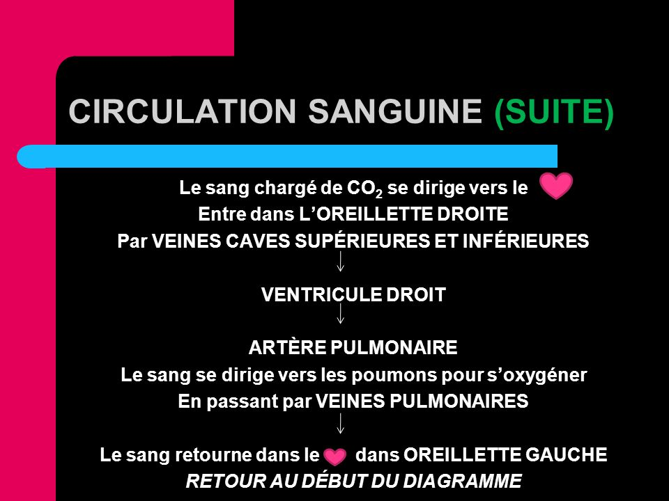 CIRCULATION SANGUINE (SUITE)