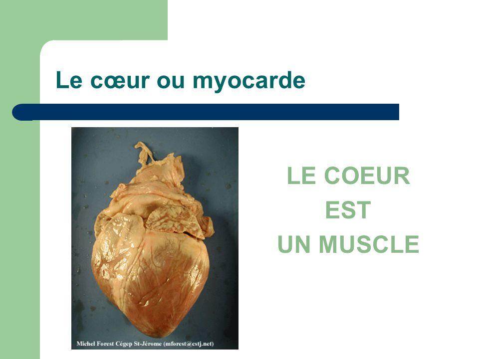 Le cœur ou myocarde LE COEUR EST UN MUSCLE