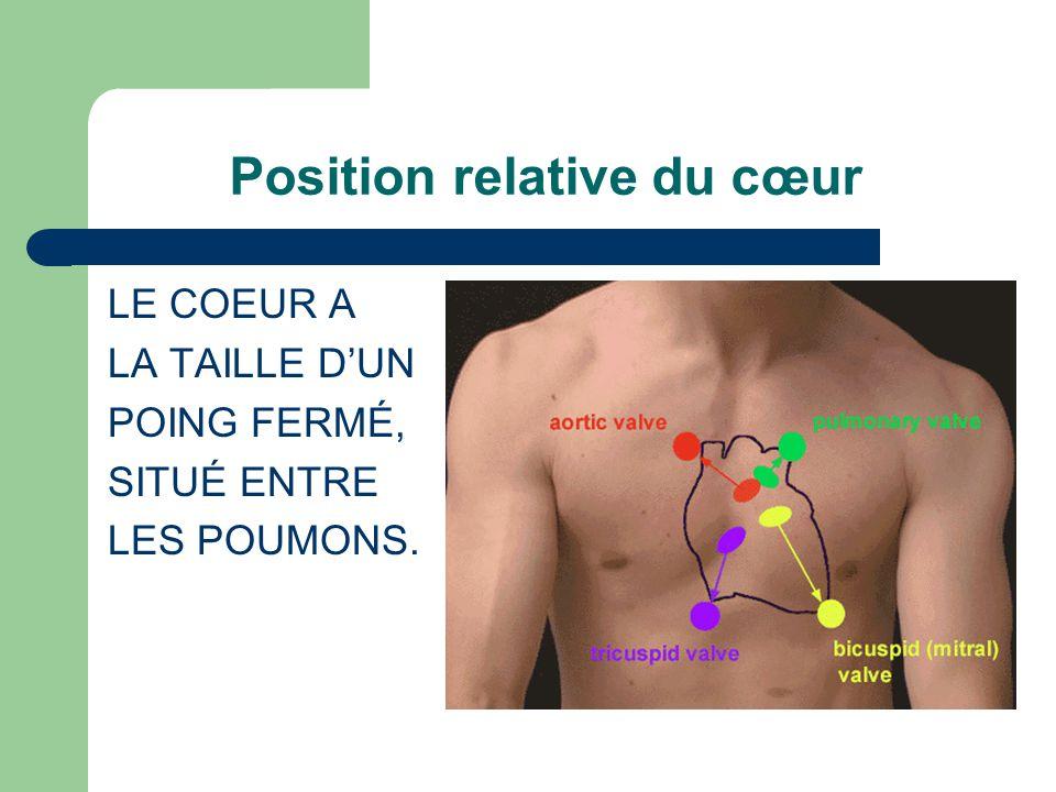 Position relative du cœur