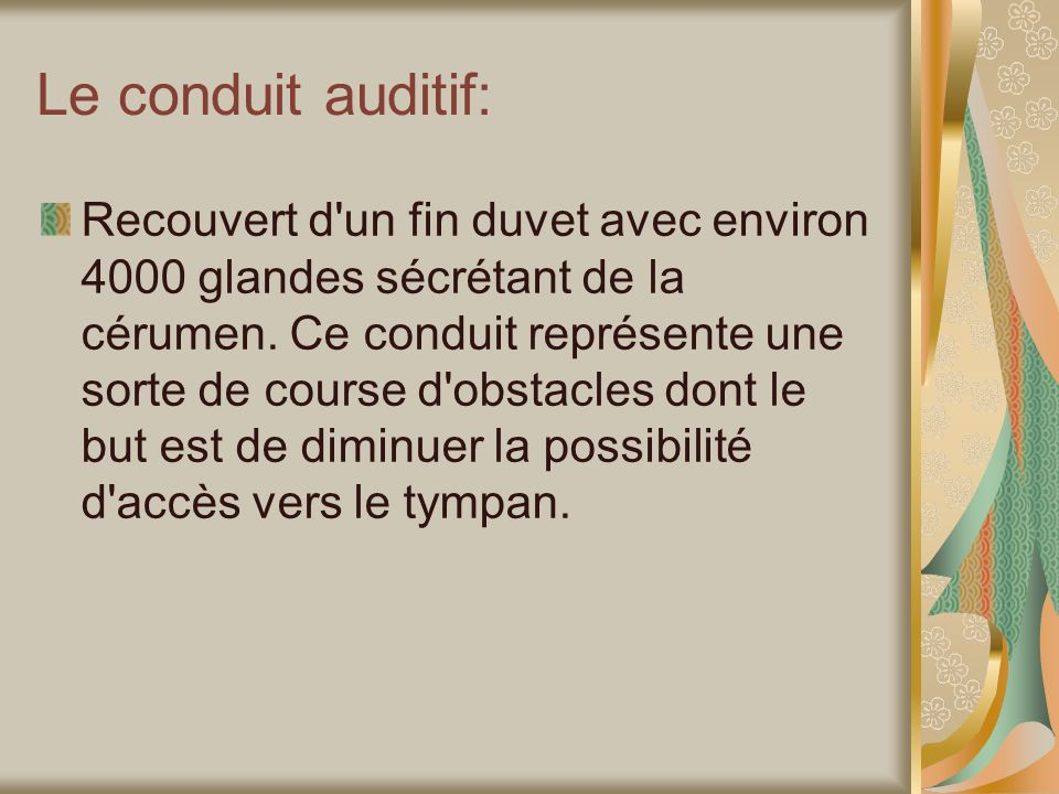 Le conduit auditif: