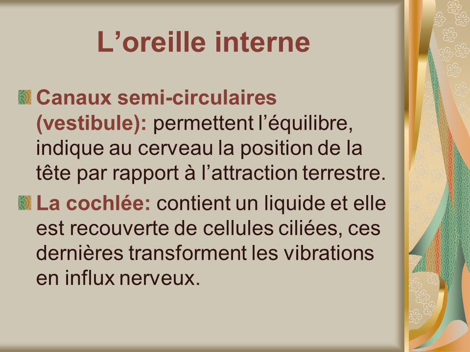 L'oreille interne