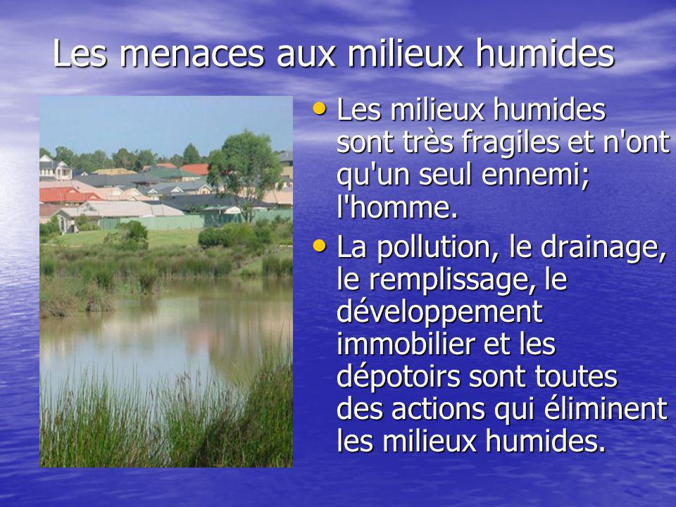 Les menaces aux milieux humides