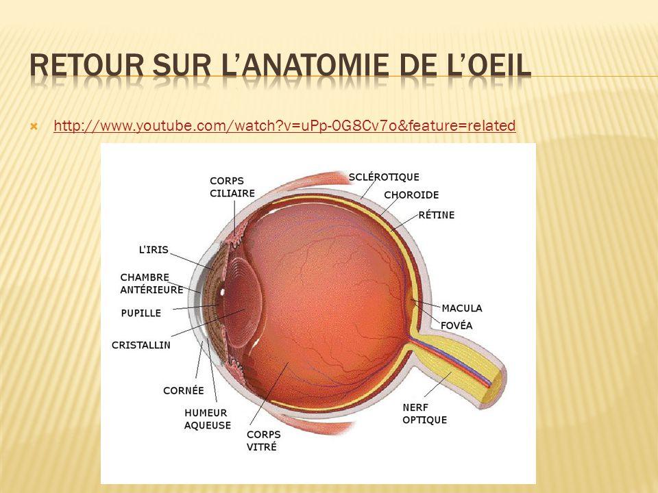 Retour sur l'anatomie de l'oeil