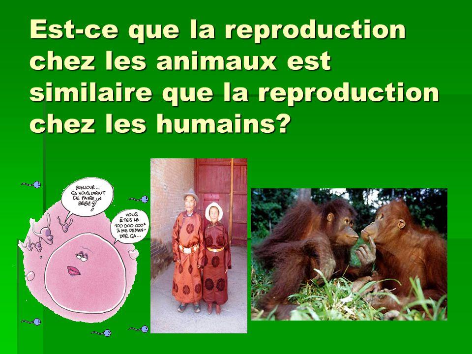 Est-ce que la reproduction chez les animaux est similaire que la reproduction chez les humains
