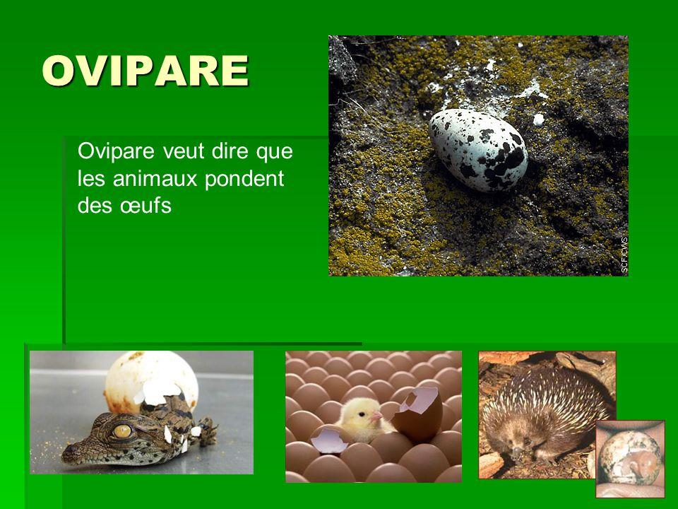 OVIPARE Ovipare veut dire que les animaux pondent des œufs