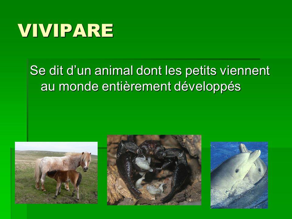 VIVIPARE Se dit d'un animal dont les petits viennent au monde entièrement développés