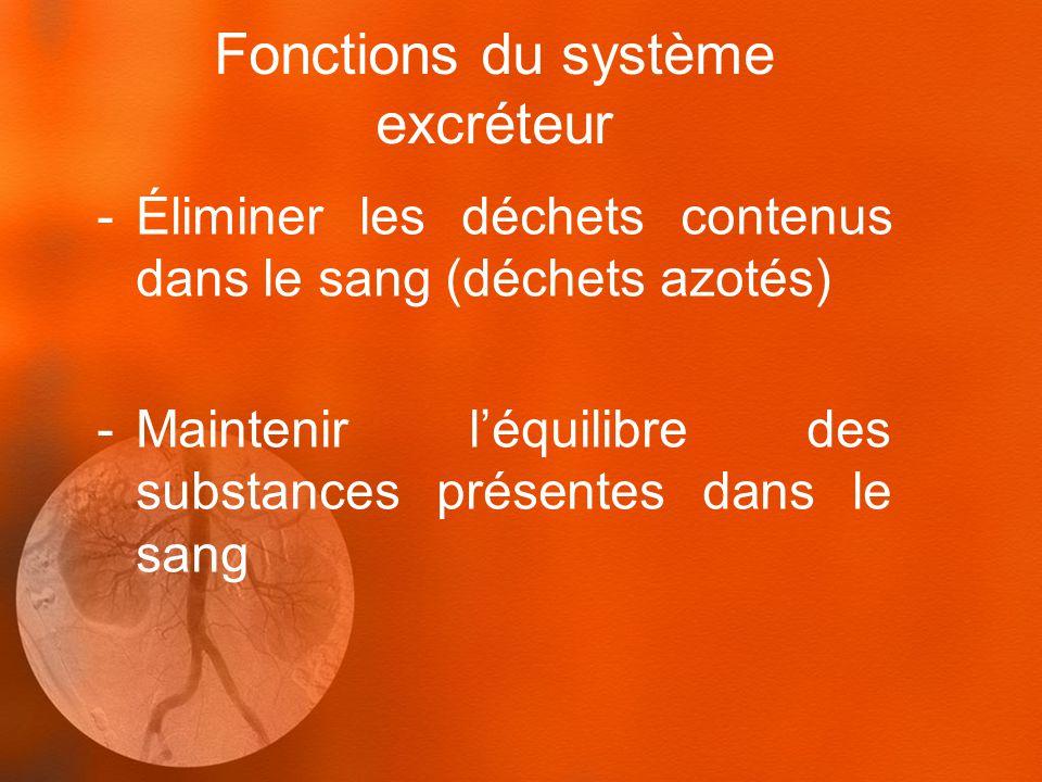 Fonctions du système excréteur