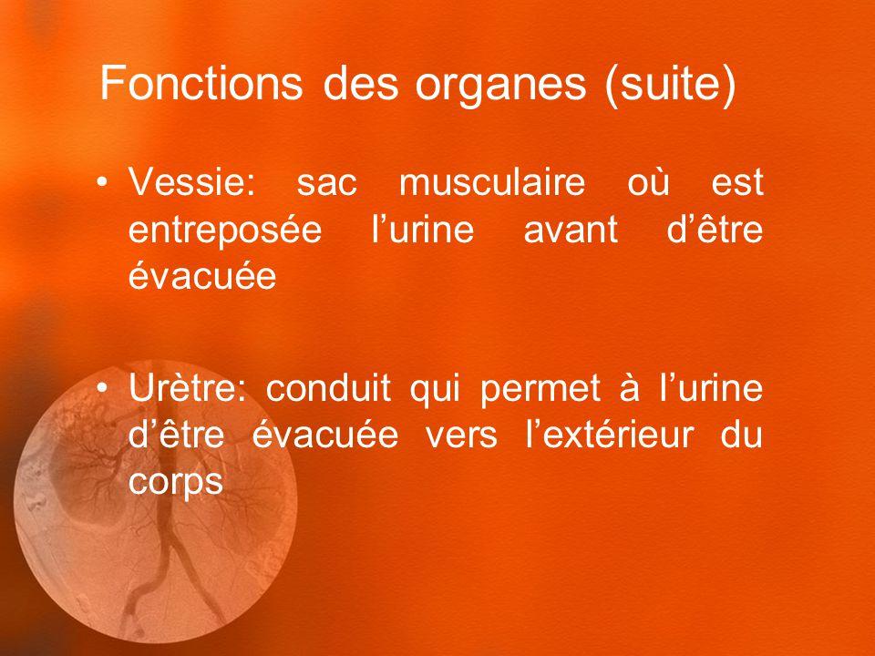 Fonctions des organes (suite)