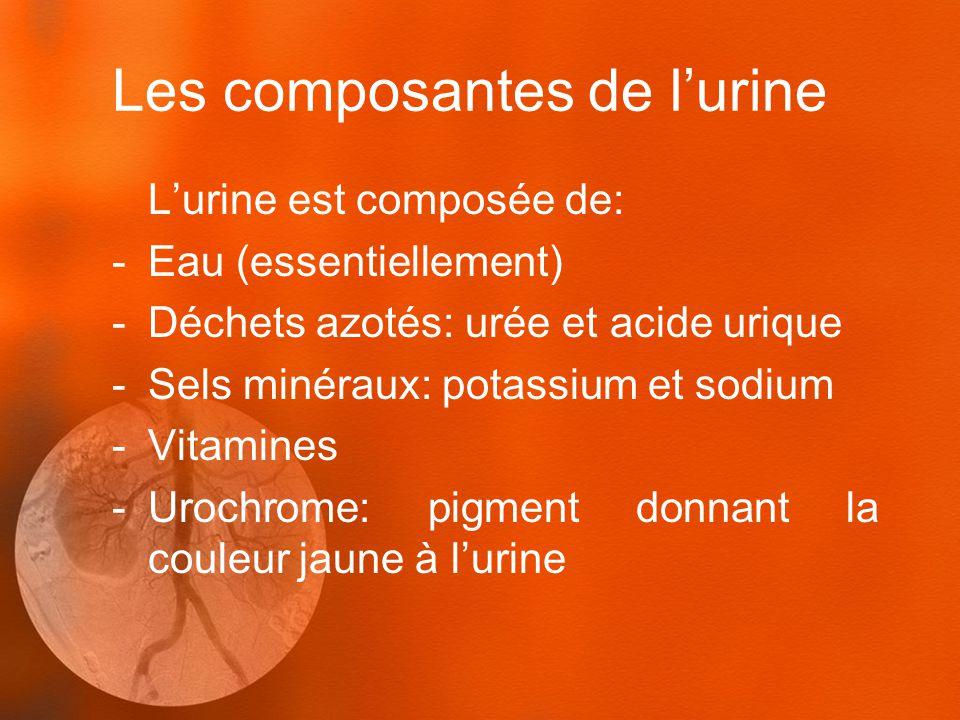 Les composantes de l'urine