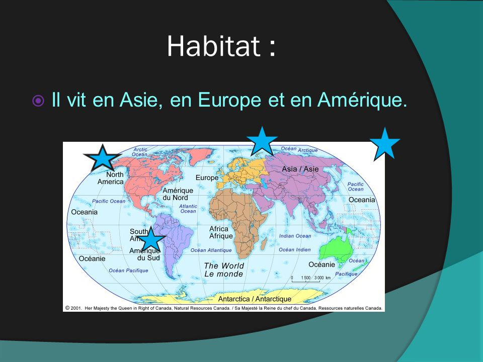 Habitat : Il vit en Asie, en Europe et en Amérique.