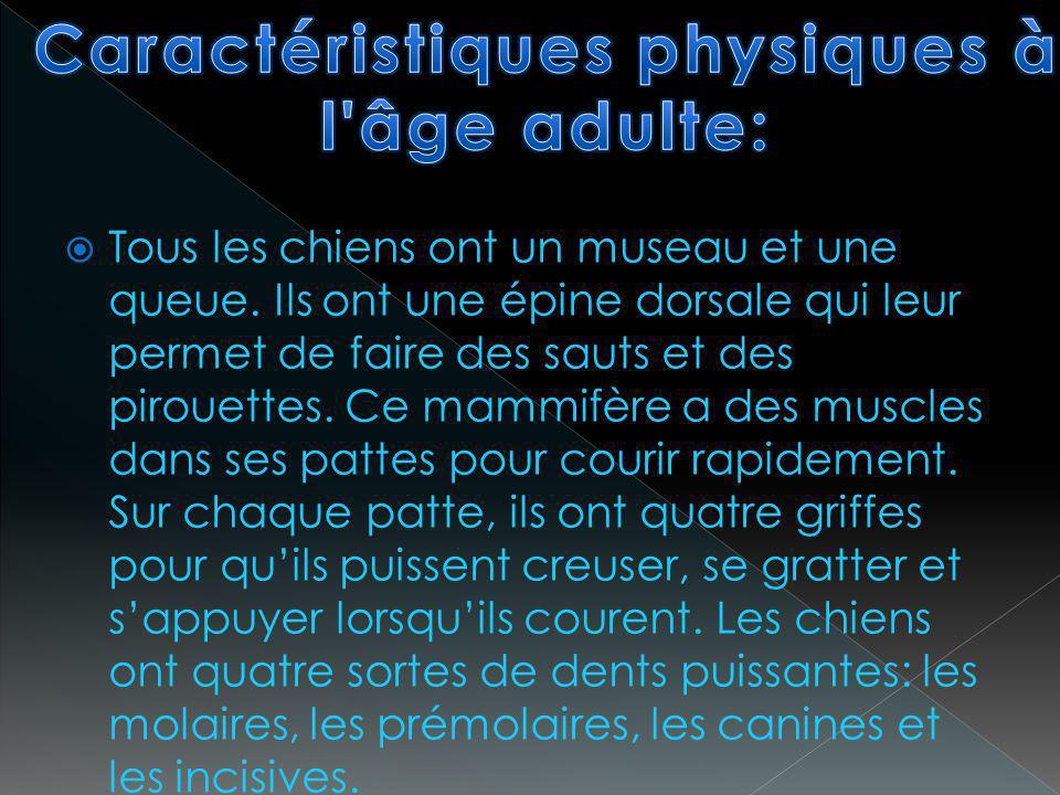 Caractéristiques physiques à l âge adulte: