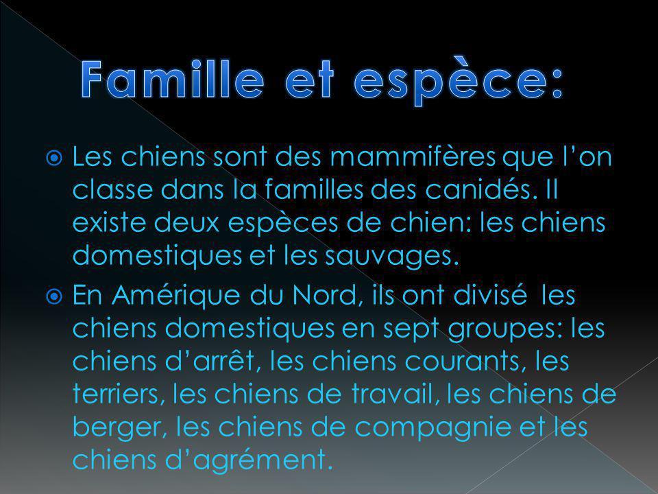 Famille et espèce: