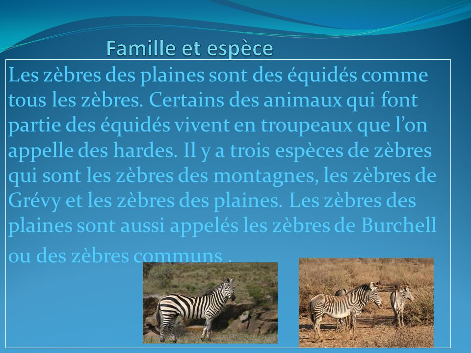 Famille et espèce