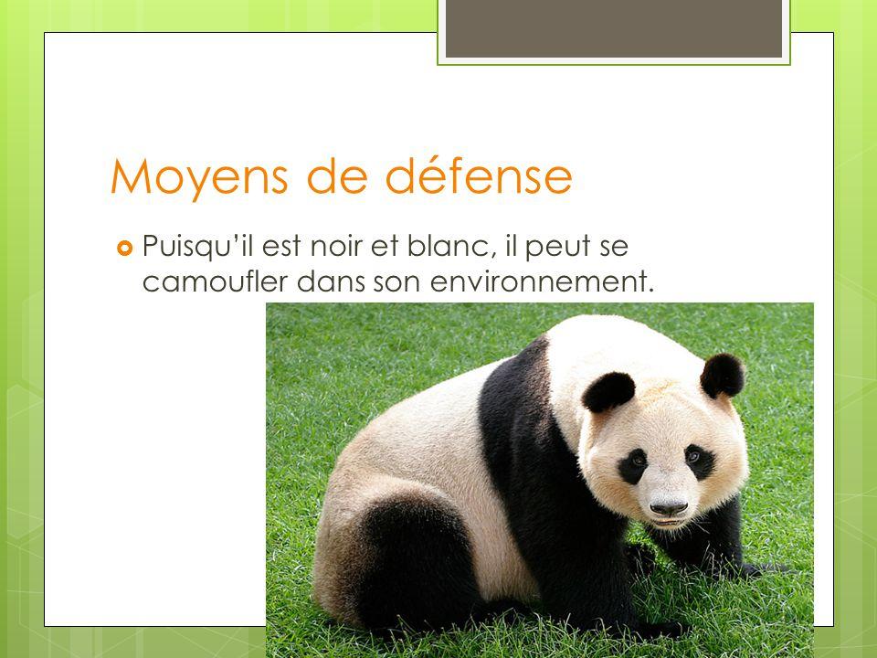 Moyens de défense Puisqu'il est noir et blanc, il peut se camoufler dans son environnement.