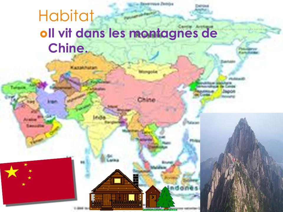 Habitat Il vit dans les montagnes de Chine.