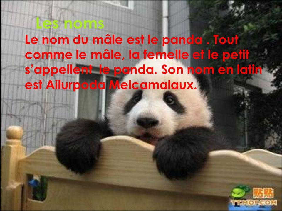 Les noms Le nom du mâle est le panda .