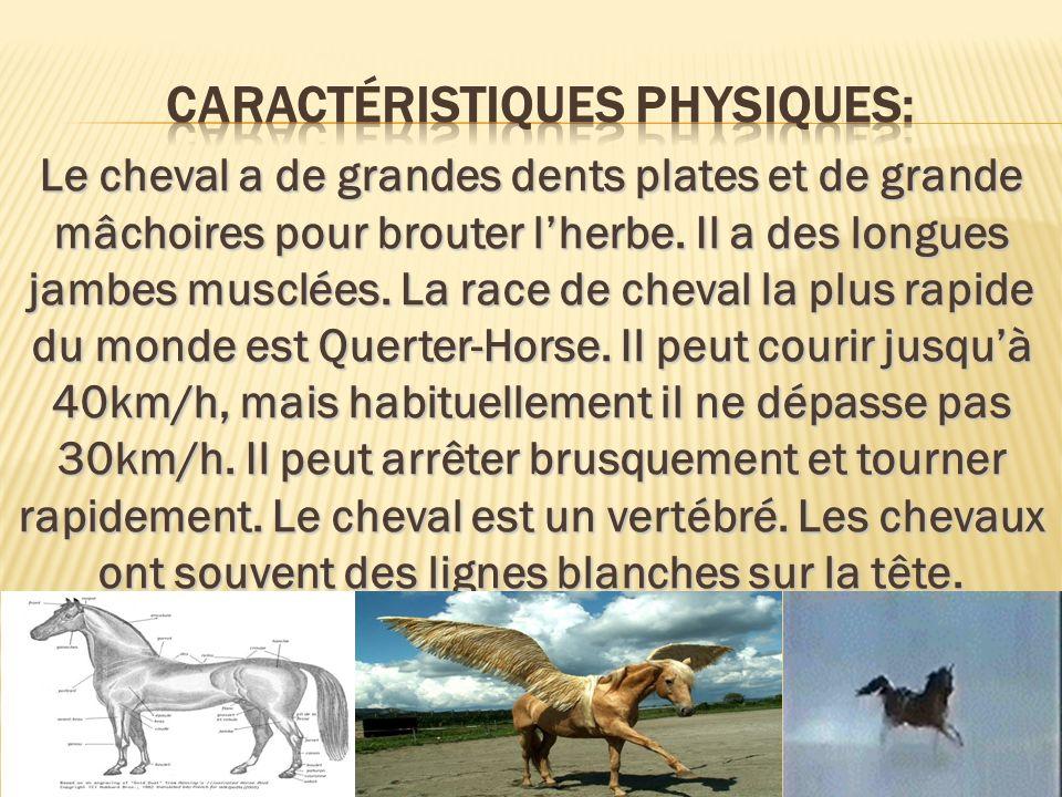 caractéristiques physiques: