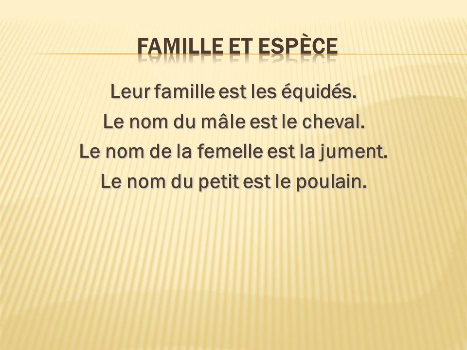 Famille et espèce Leur famille est les équidés. Le nom du mâle est le cheval.