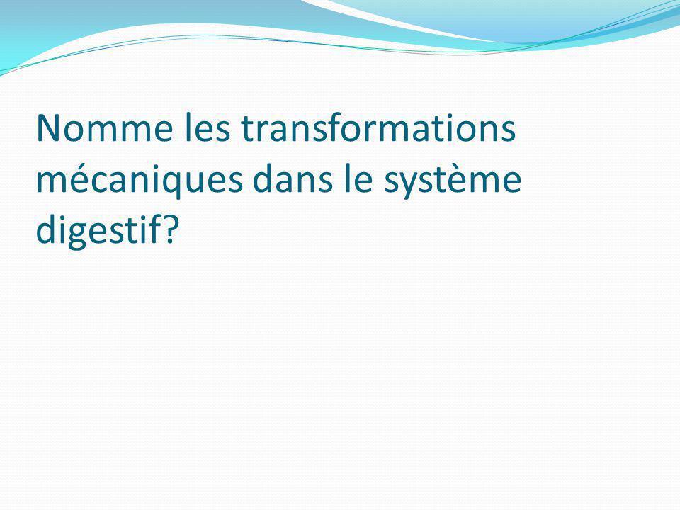 Nomme les transformations mécaniques dans le système digestif