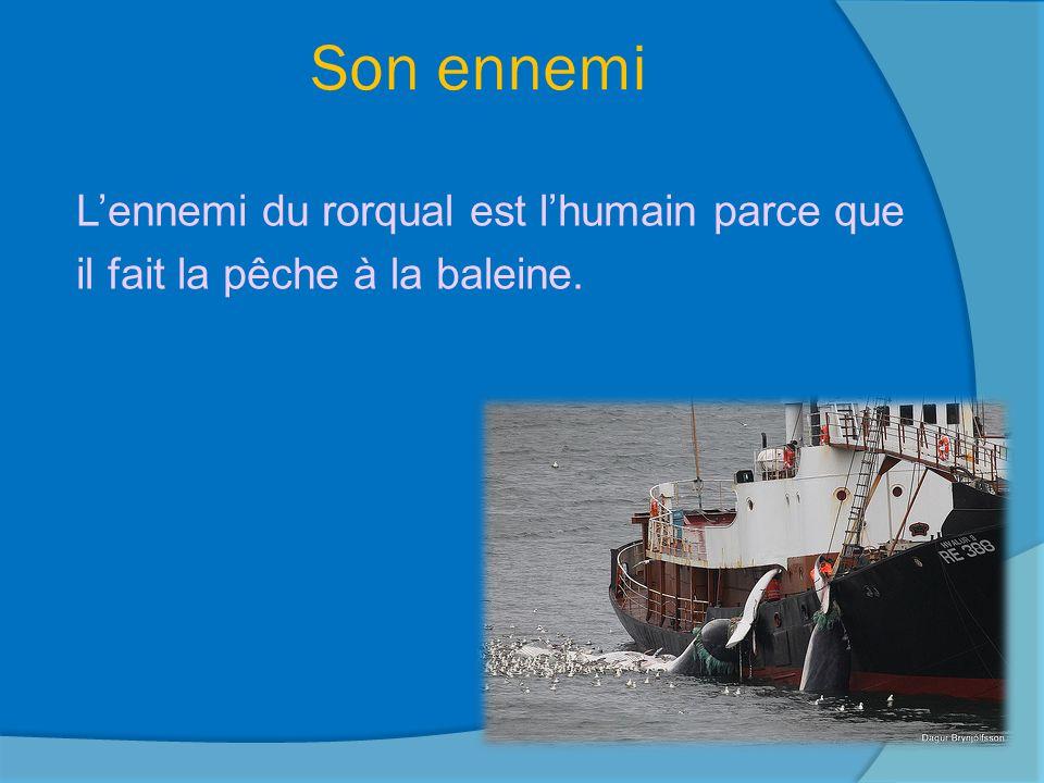 Son ennemi L'ennemi du rorqual est l'humain parce que il fait la pêche à la baleine.