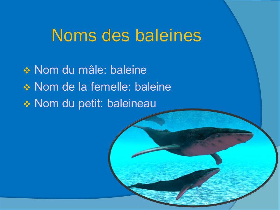 Noms des baleines Nom du mâle: baleine Nom de la femelle: baleine
