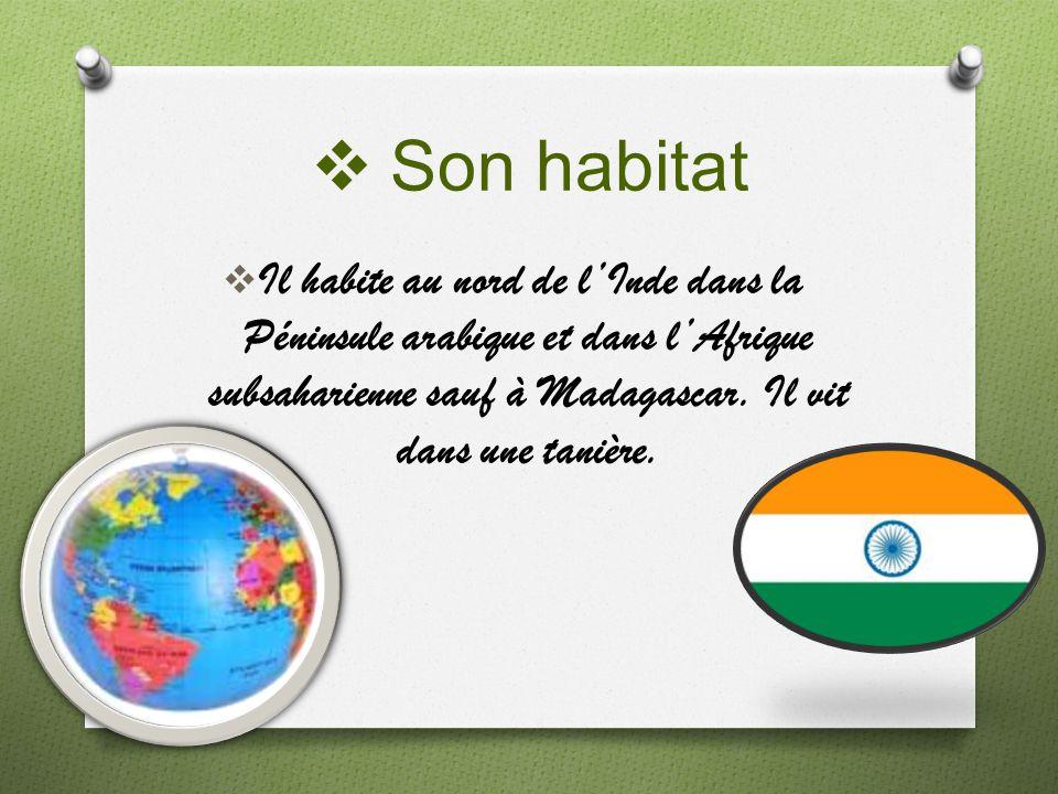 Son habitat Il habite au nord de l'Inde dans la Péninsule arabique et dans l'Afrique subsaharienne sauf à Madagascar.