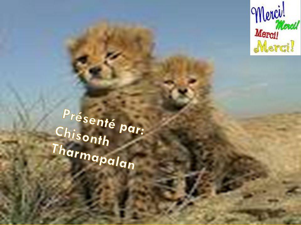 Présenté par: Chisonth Tharmapalan