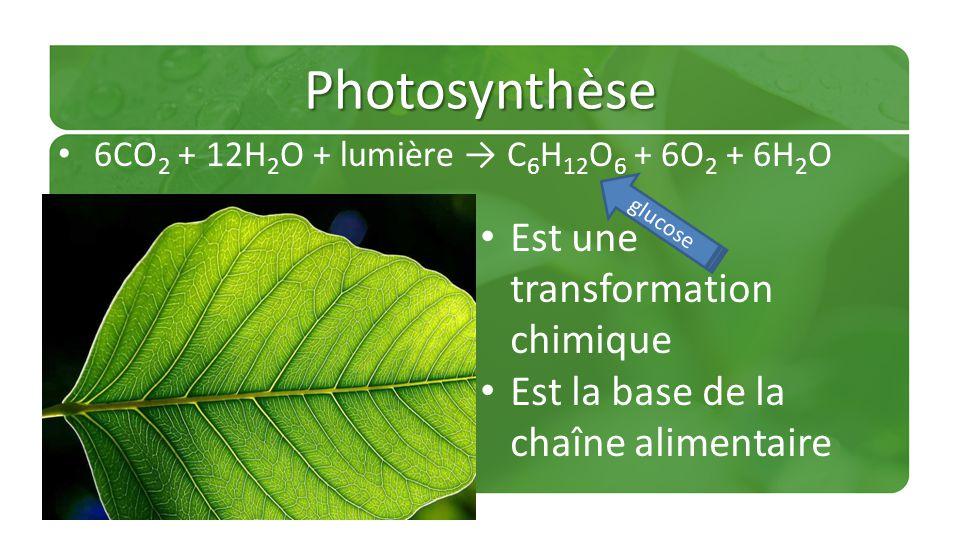 Photosynthèse Est une transformation chimique
