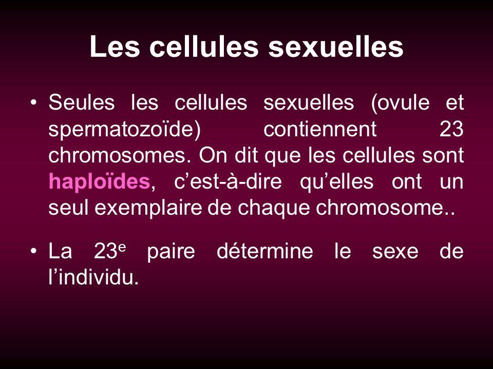 Les cellules sexuelles