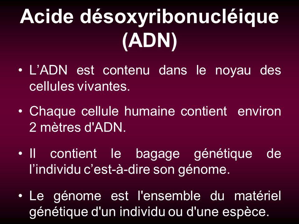 Acide désoxyribonucléique (ADN)