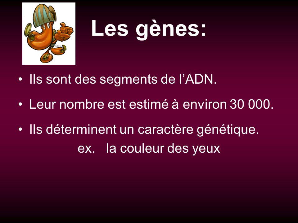 Les gènes: Ils sont des segments de l'ADN.