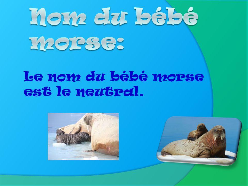 Nom du bébé morse: Le nom du bébé morse est le neutral.
