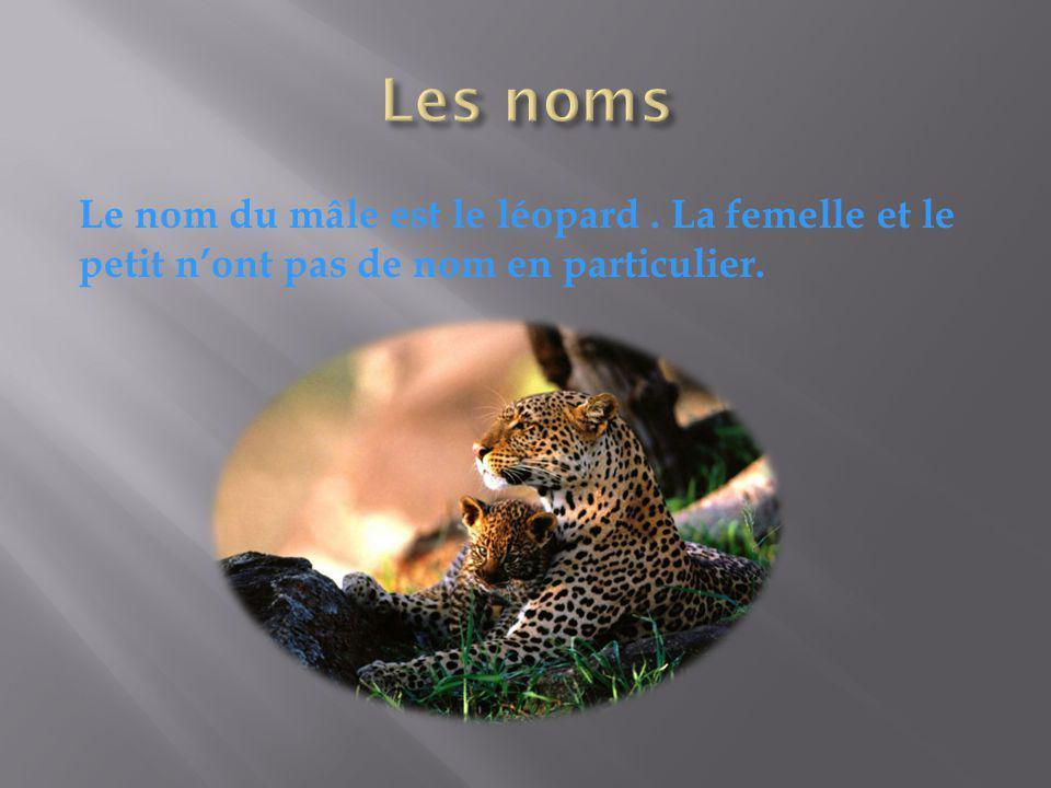 Les noms Le nom du mâle est le léopard . La femelle et le petit n'ont pas de nom en particulier.