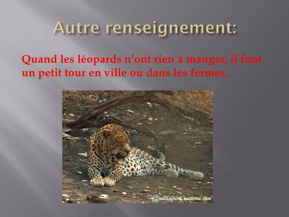 Autre renseignement: Quand les léopards n'ont rien à manger, il font un petit tour en ville ou dans les fermes.