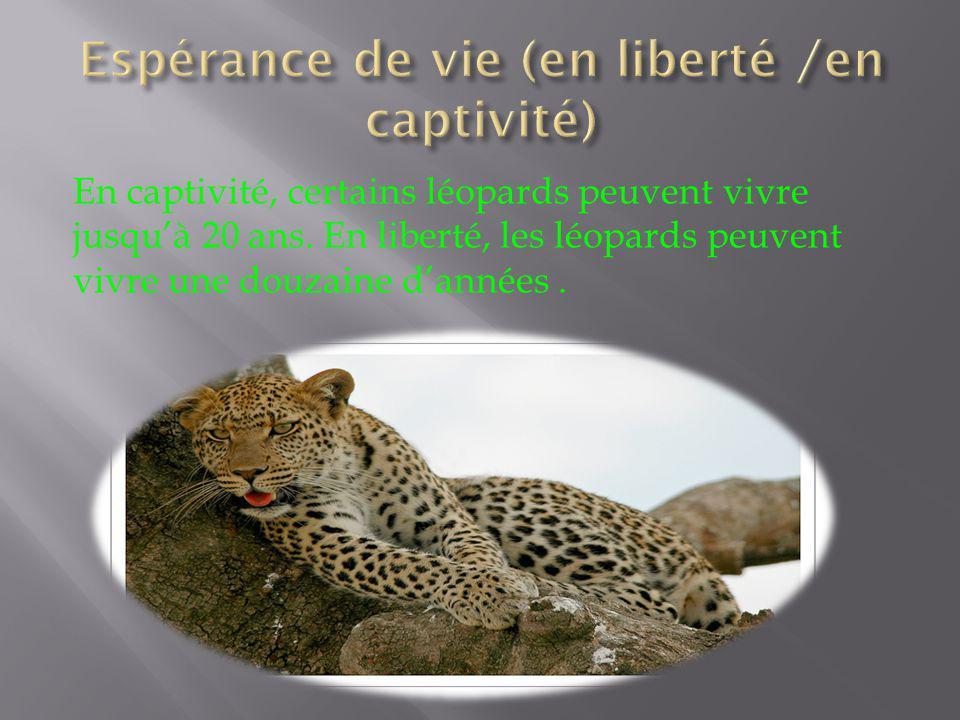 Espérance de vie (en liberté /en captivité)
