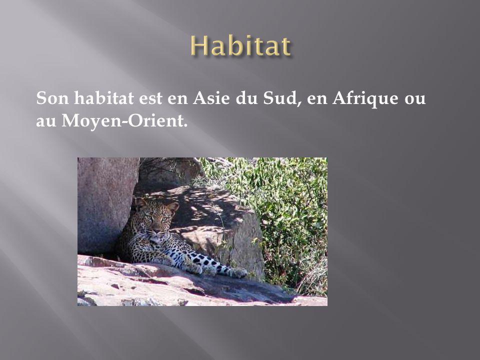 Habitat Son habitat est en Asie du Sud, en Afrique ou au Moyen-Orient.