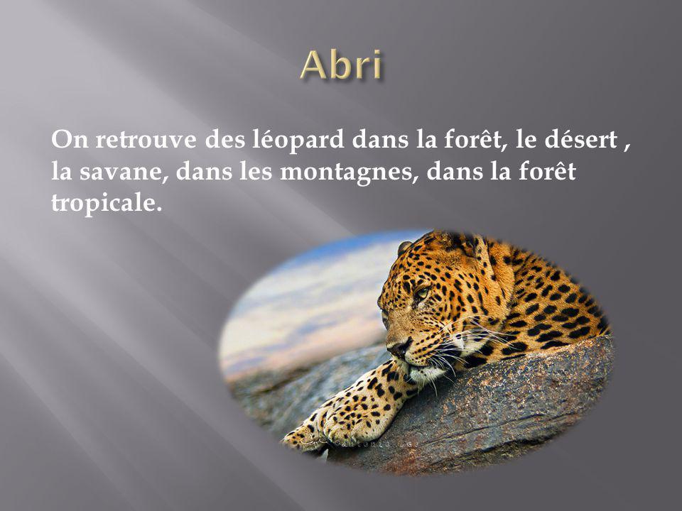 Abri On retrouve des léopard dans la forêt, le désert , la savane, dans les montagnes, dans la forêt tropicale.