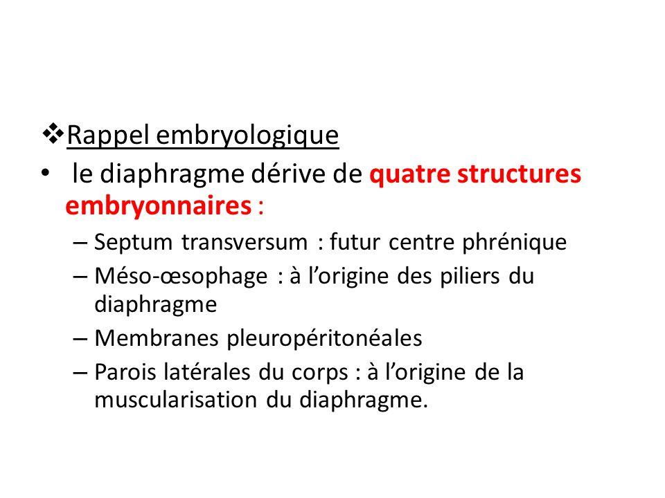 le diaphragme dérive de quatre structures embryonnaires :
