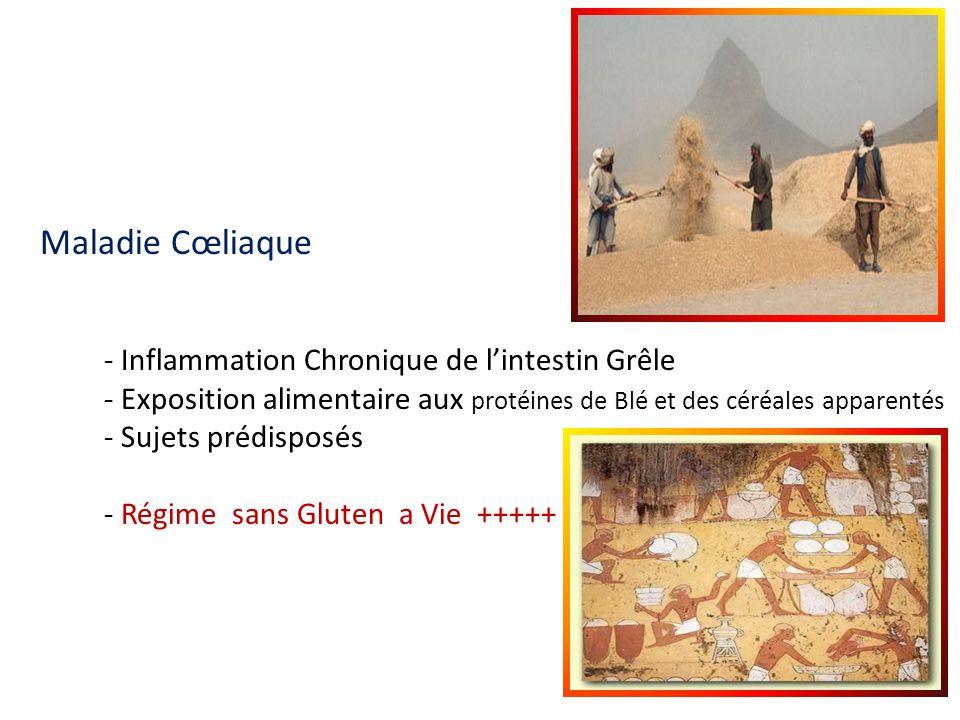 Maladie Cœliaque - Inflammation Chronique de l'intestin Grêle