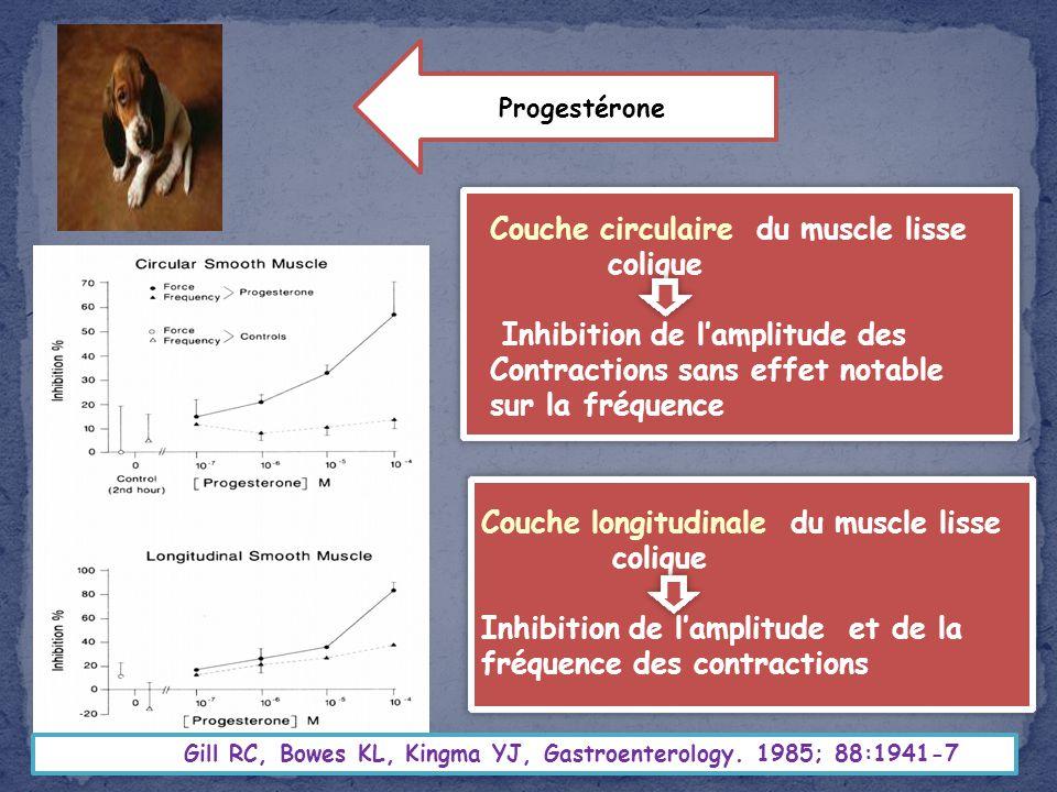 Couche circulaire du muscle lisse colique