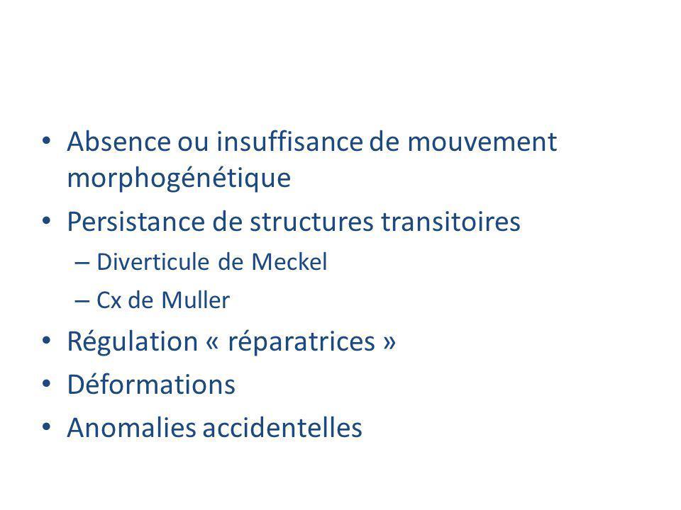 Absence ou insuffisance de mouvement morphogénétique