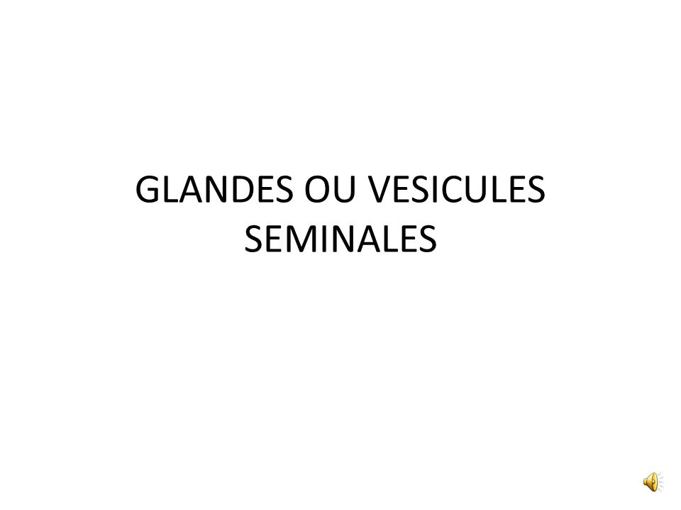 GLANDES OU VESICULES SEMINALES