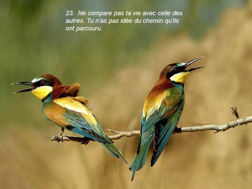 23. Ne compare pas ta vie avec celle des autres