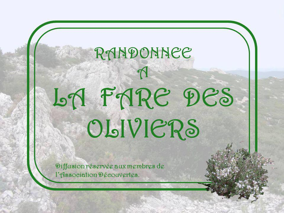 LA FARE DES OLIVIERS RANDONNEE A