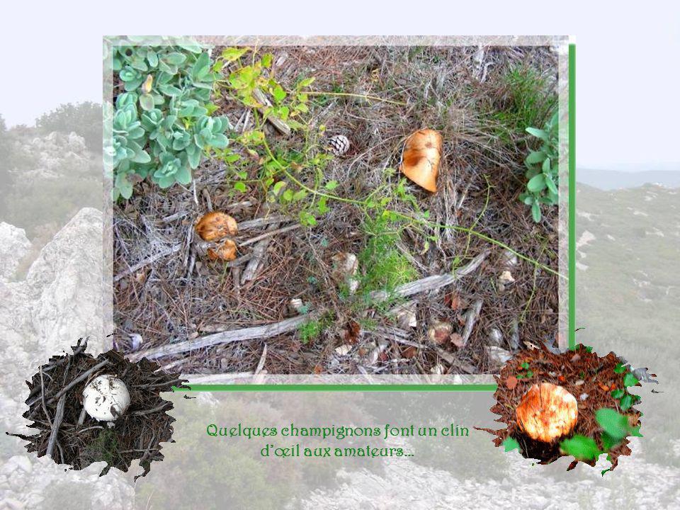 Quelques champignons font un clin d'œil aux amateurs…